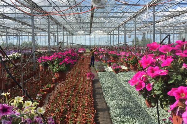 Moskou Rusland Olsthoorn Greenhouse00002
