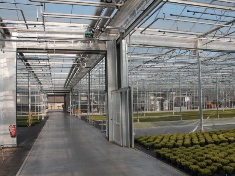 Beauty Ladies Duitsland kassenbouw olsthoorn greenhouse 11
