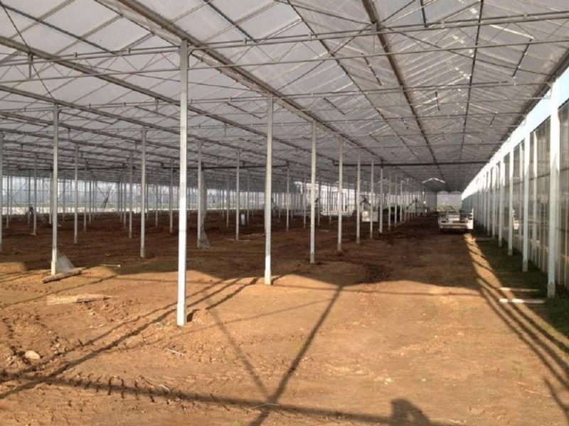 Kempen Duitsland Kassenbouw Olsthoorn Greenhouse Projects 10