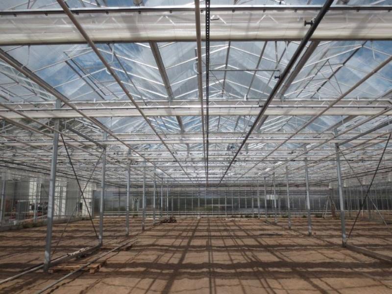 Kevelaer Duitsland kassenbouw olsthoorn greenhouse 17