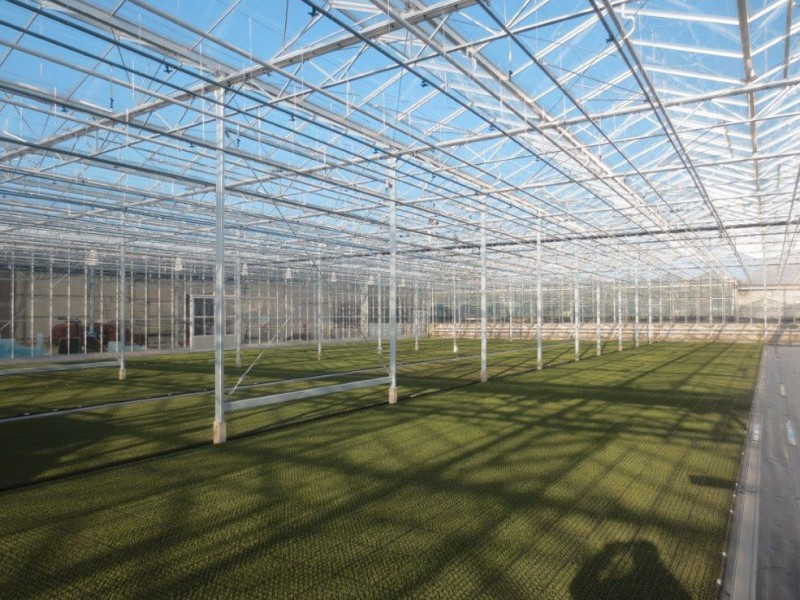Straelen 4 Duitsland Kassenbouw Olsthoorn Greenhouse Projects 1