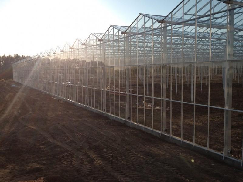 Veresegyhaz Hongarije Kassenbouw Olsthoorn Greenhouse Projects 26