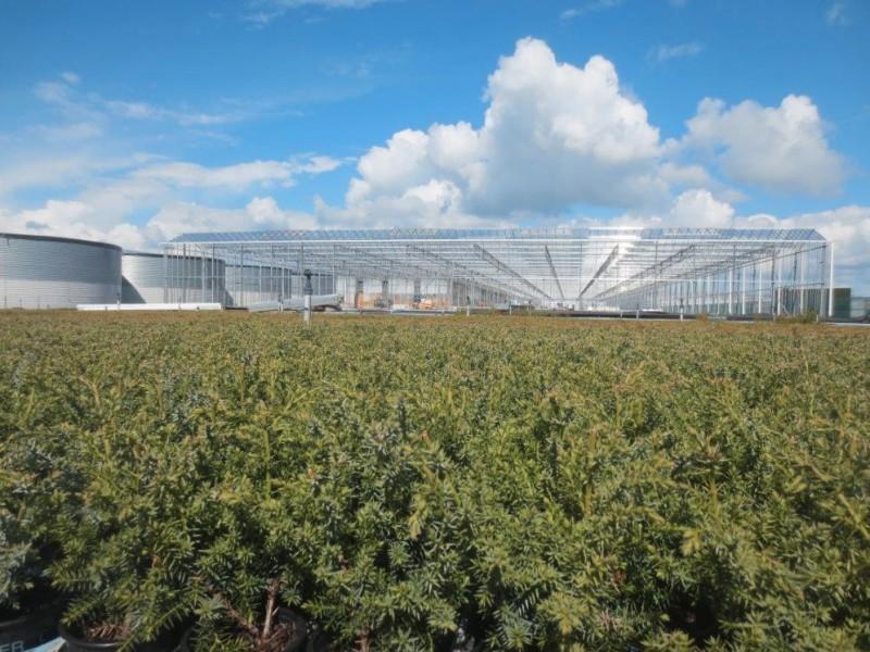 Boskoop Nederland kassenbouw olsthoorn greenhouse 1