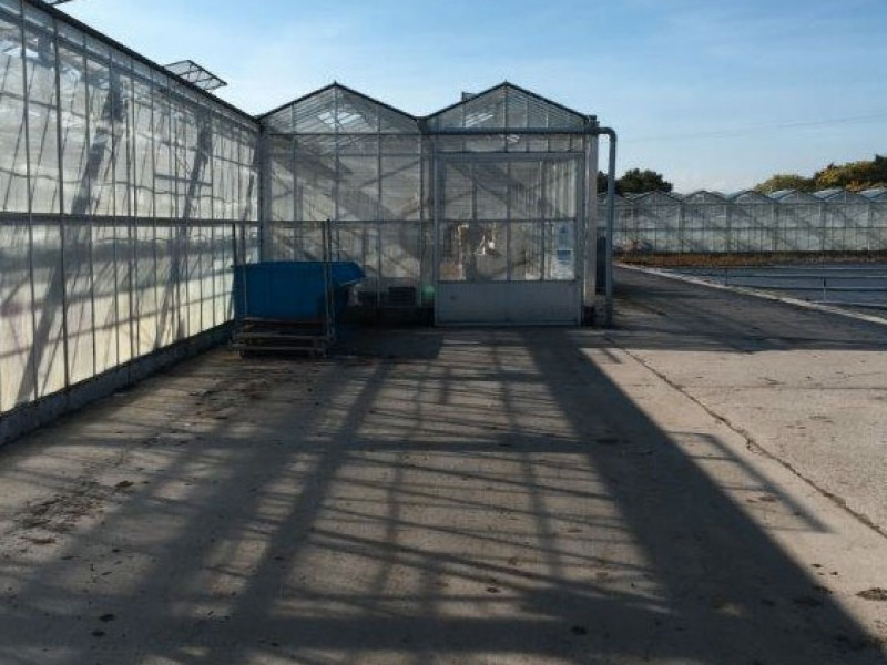 Tandragee Northern Ireland Kassenbouw Olsthoorn Greenhouse Projects 1