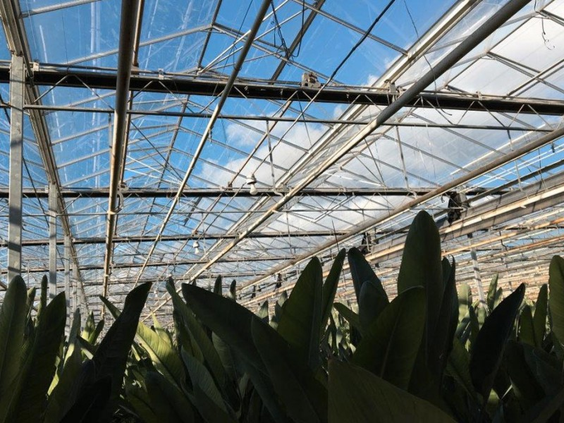 Greenhouse 18000 Olsthoorn projects1