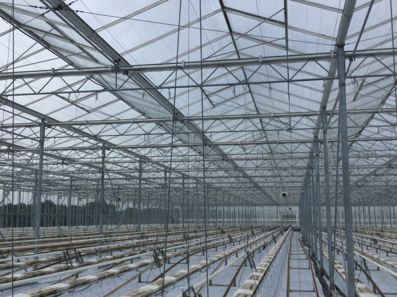 Hoofdfoto Greenhouse project Hortined Milizac 7 Olsthoorn