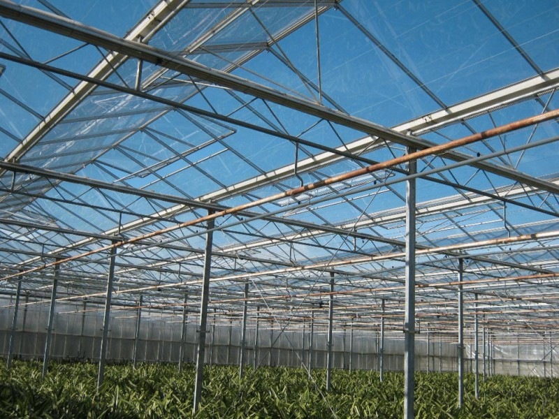 Greenhouse 6000 Olsthoorn projects5