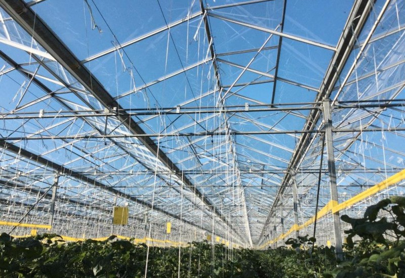 Greenhouse 30000 Olsthoorn projects3