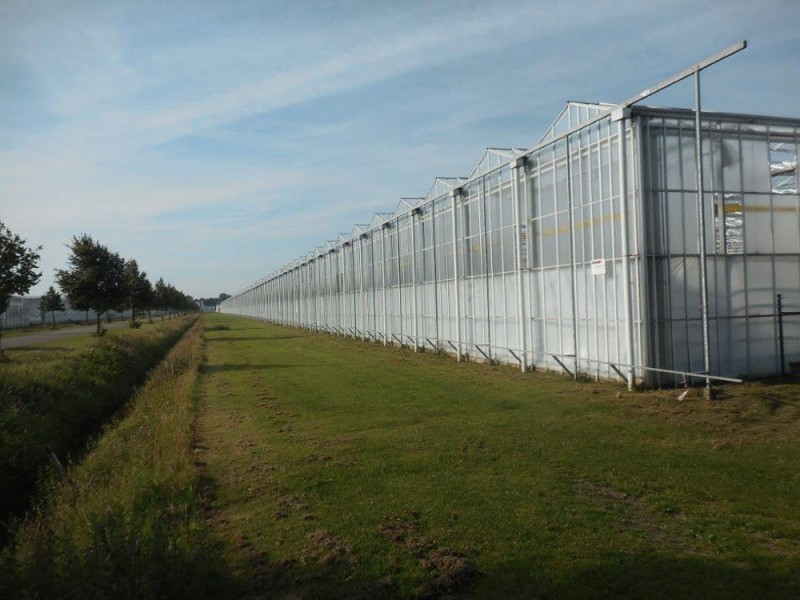Greenhouse 50000 Olsthoorn projects1