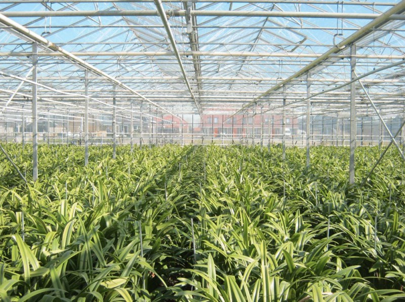 Greenhouse 7000 Olsthoorn projects1